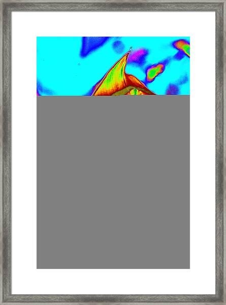 Fired Up Anthurium Framed Print
