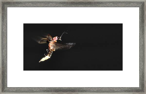Firefly In Flight Framed Print