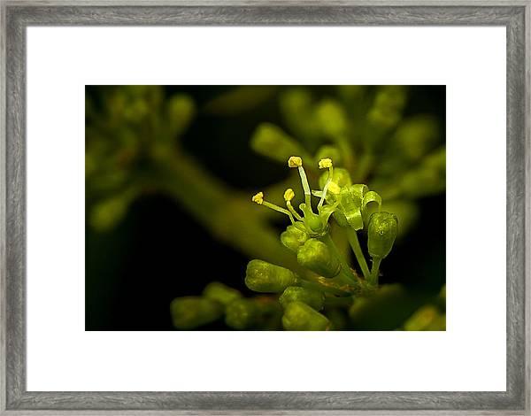 First Flower Framed Print
