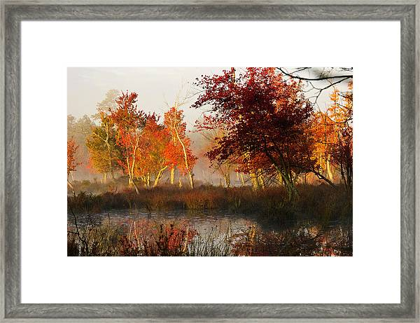 First Light At The Pine Barrens Framed Print