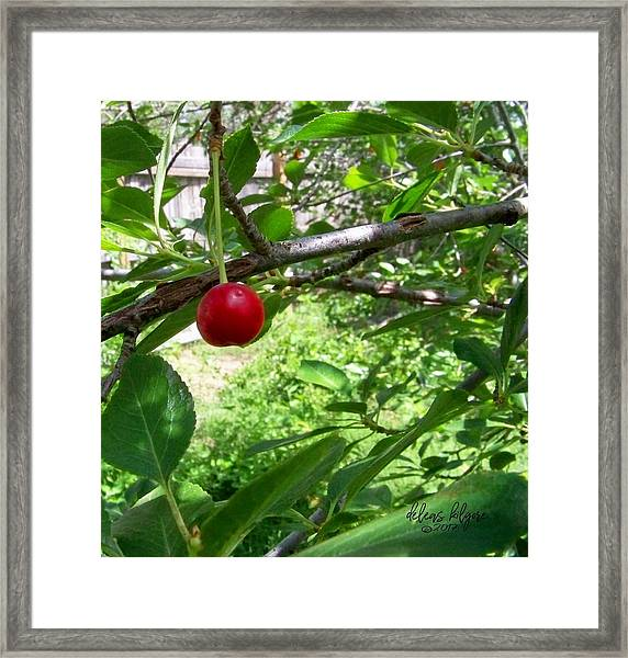First Of The Season Framed Print