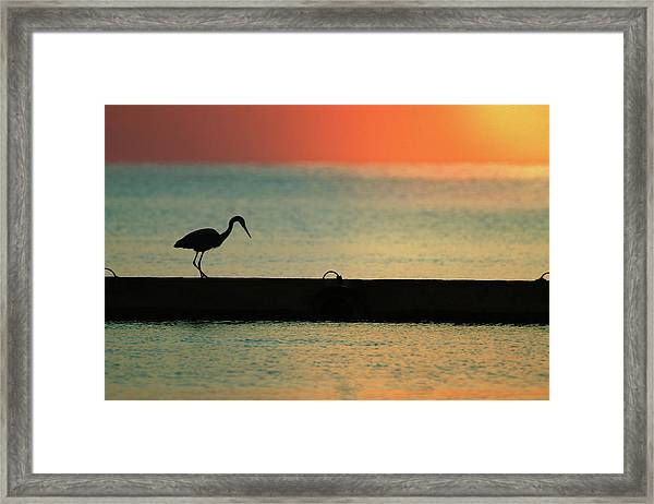 First On The Jetty Framed Print