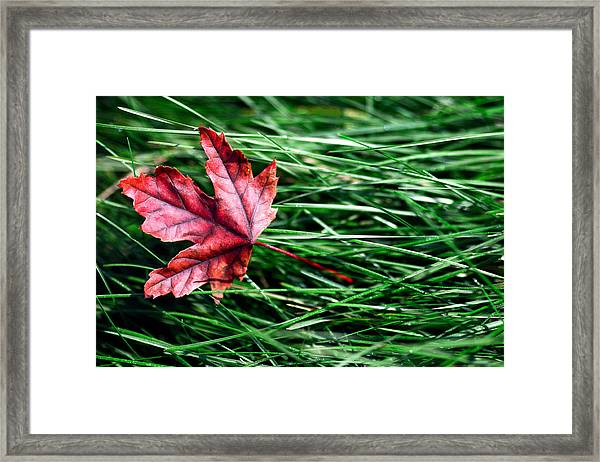 First Signs Of Autumn Framed Print