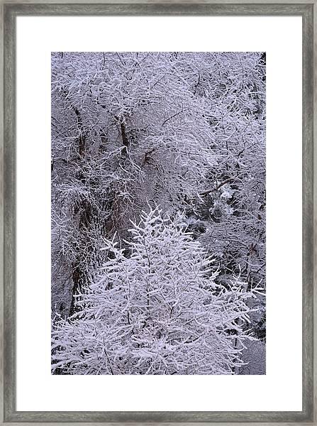 First Snow I Framed Print