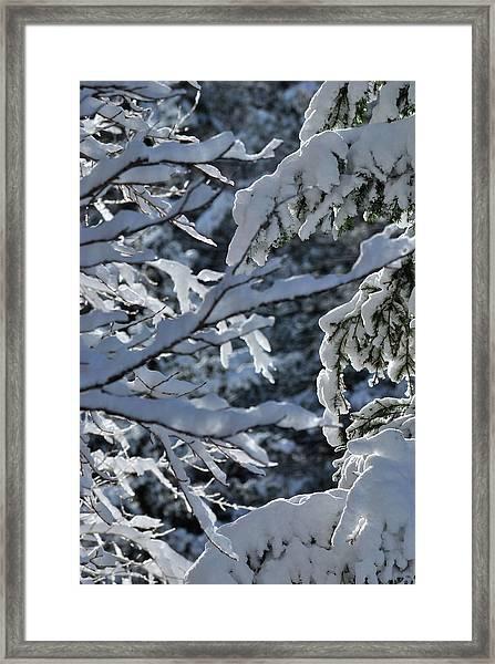 First Snow II Framed Print