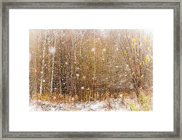 First Snow. Snow Flakes I Framed Print