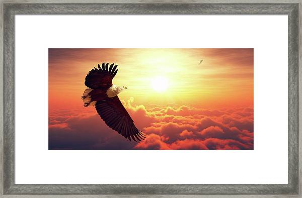Fish Eagle Flying Above Clouds Framed Print