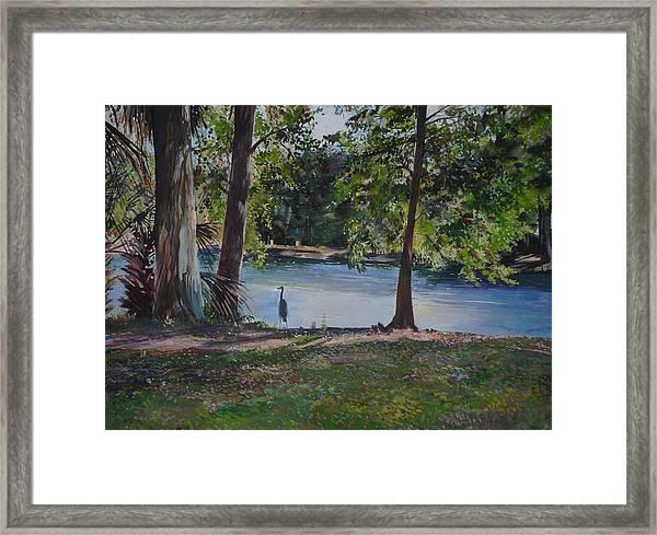 Fish Hunter's Of Palmetto Dunes Framed Print