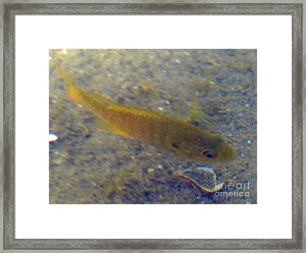 Fish Sandy Bottom Framed Print