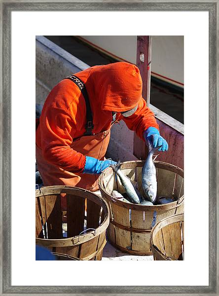 Fisherman Sorting His Catch Framed Print