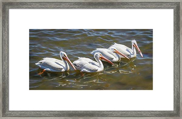 Fishing Line Framed Print