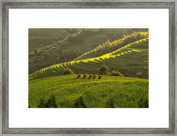Five Ladies In Rice Fields Framed Print