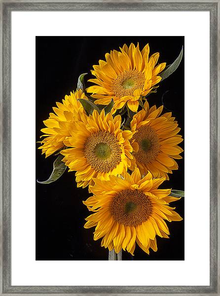 Five Sunflowers Framed Print