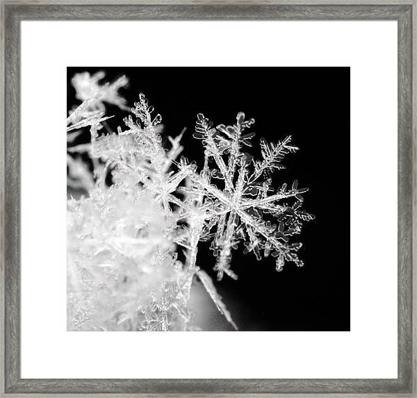 Flake Framed Print