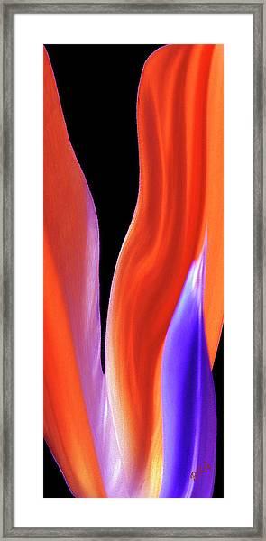 Flame - Bird Of Paradise   Framed Print