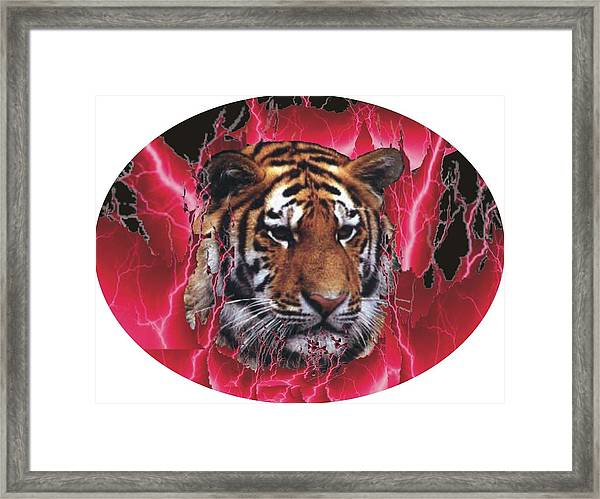 Flame Tiger Framed Print by Kathy Frankford