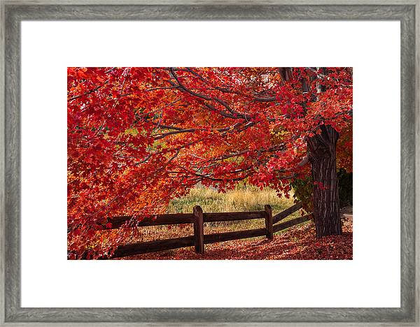 Flames On The Fence Framed Print