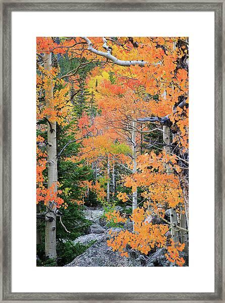 Flaming Forest Framed Print