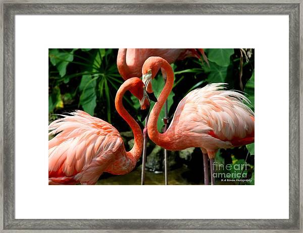 Flamingo Heart Framed Print