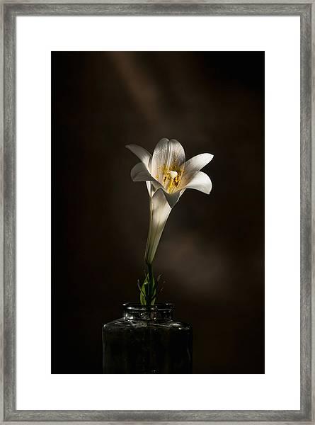 Flashlight Series Easter Lily 1 Framed Print