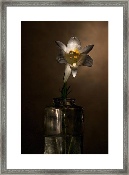 Flashlight Series Easter Lily 2 Framed Print