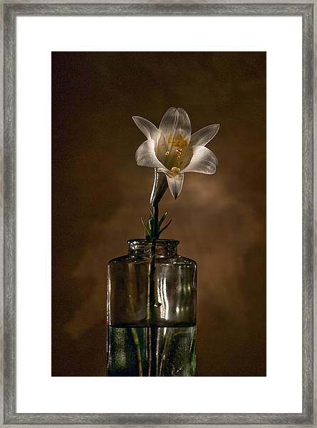Flashlight Series Easter Lily 3 Framed Print