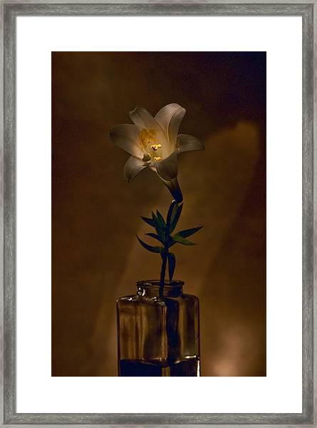 Flashlight Series Easter Lily 4 Framed Print