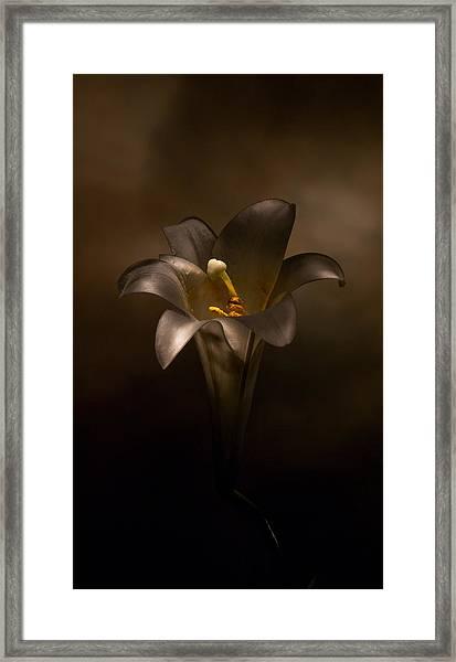 Flashlight Series Easter Lily 6 Framed Print