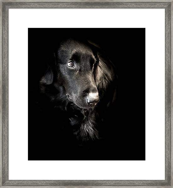 Flat Coated Retriever Framed Print