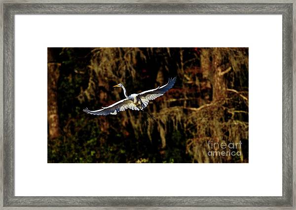 Framed Print featuring the photograph Flight Of The Egret by DJA Images