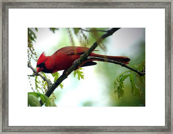 Flight Preparation Framed Print