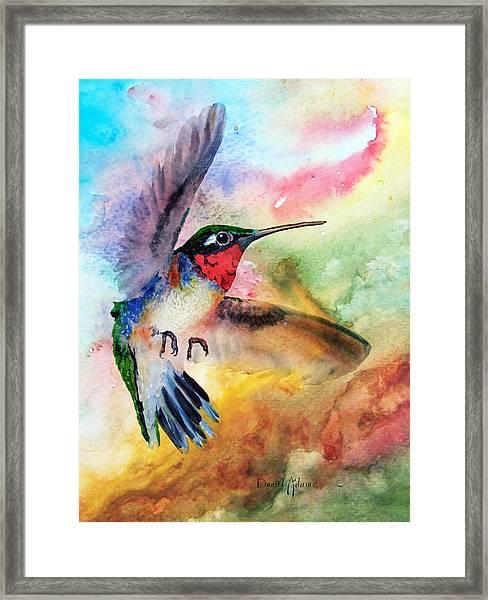 Da198 Flit The Hummingbird By Daniel Adams Framed Print