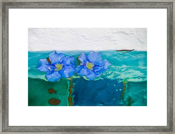 Floaters Framed Print