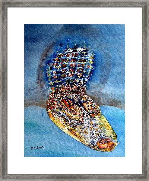 Floating Gator Framed Print