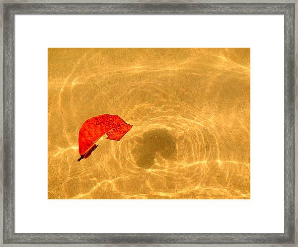 Floating In Gold Framed Print