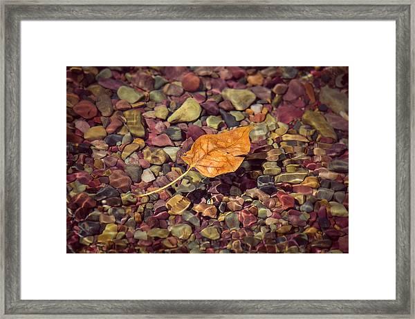 Floating Leaf Framed Print