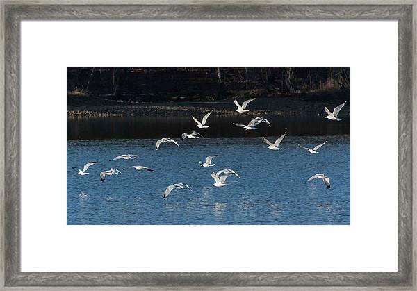 Flock Of Them Framed Print