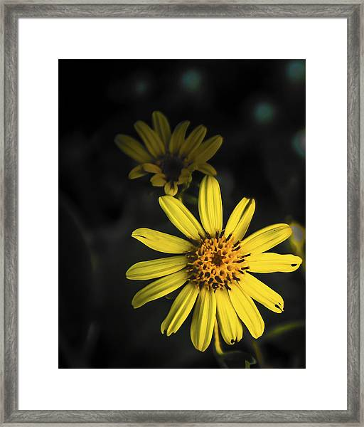 Flora In Yellow Framed Print