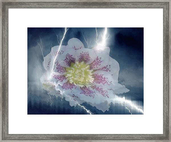 Floral Lightning Reflections Framed Print