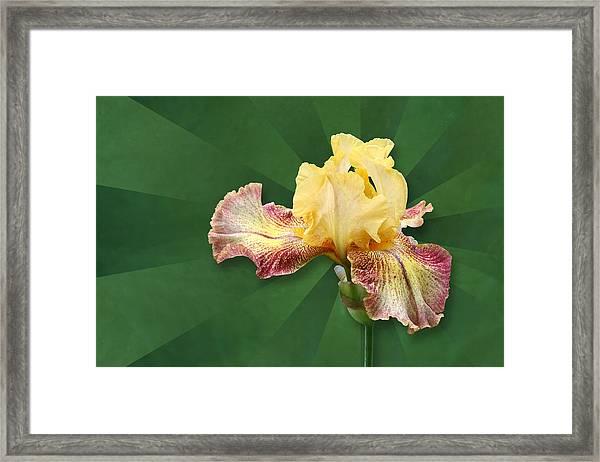 Floral Radiance Framed Print