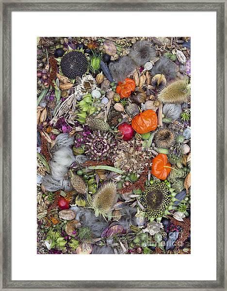 Floral Seed Pods Framed Print