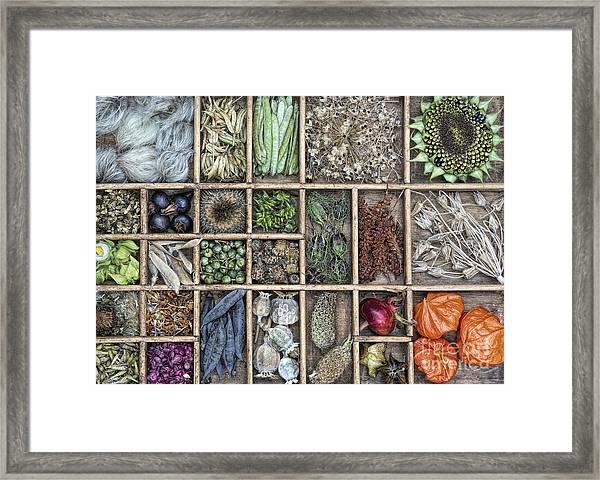 Floral Seeds Framed Print