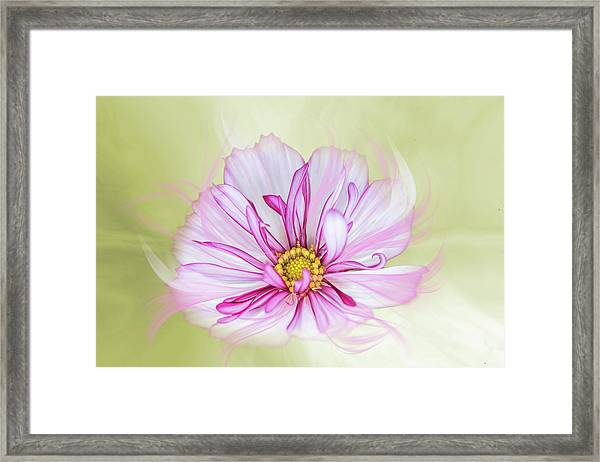 Floral Wonder Framed Print