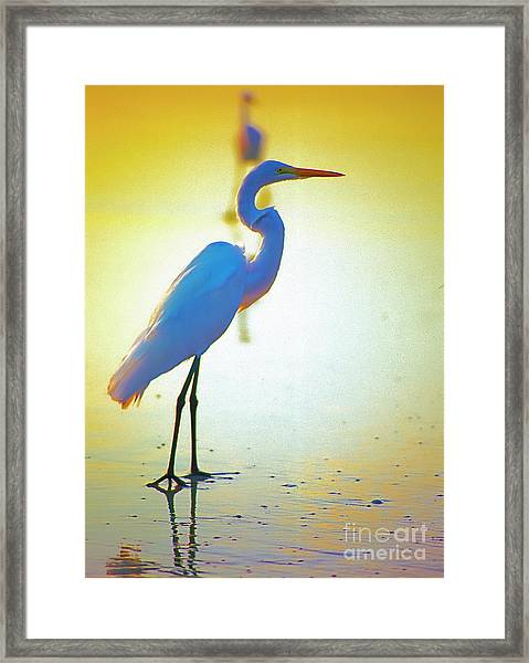 Florida Atlantic Beach Ocean Birds  Framed Print