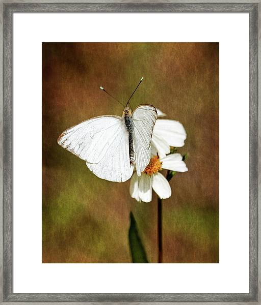 Florida White Framed Print