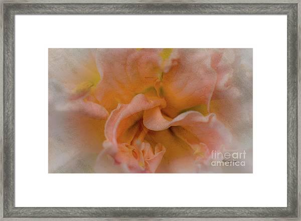 Florwer For You Framed Print