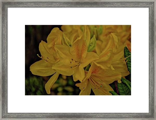 Flower 6 Framed Print