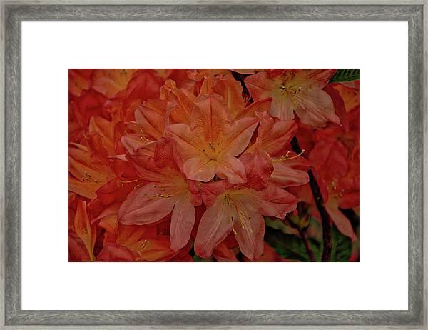 Flower 7 Framed Print