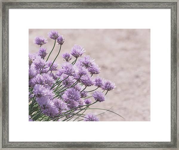 Flower Chives Framed Print