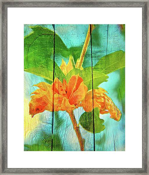 Flower Cup, Hibiscus Framed Print